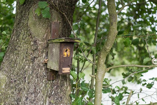 Aviary, Forest, Tree, Nature, Shelter, Bird Feeder