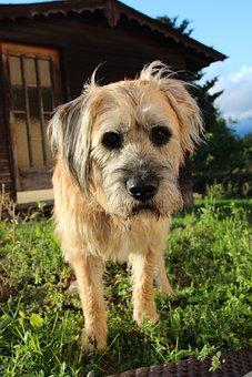 Dog, Pet, Hybrid, Curious, Dog On Meadow, Funny