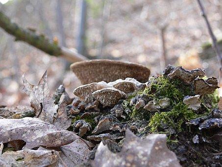 Mushroom, Forest, Autumn, Nature, Forest Mushrooms