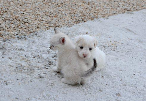 Dog Cat, Puppy, Kitten, Hug, Tenderness, Complicity
