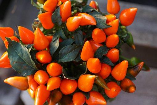 Chili, Eat, Pot, Nature, Garden, Park, Market, Music