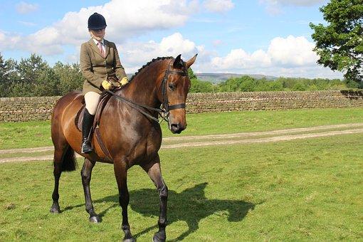 Horse, Otley, Show, Rider