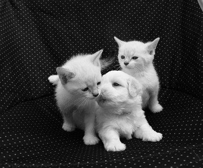 Kiss, Puppy Kittens, Dog Cats, Photo Black White