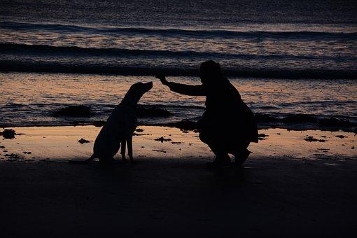 Woman, Dog, Sea, Sunset, Trust, Loyalty