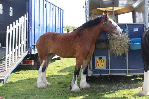 Horse, Otley, Show, Shire