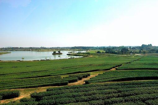 Rai Boon Rawd, Chiang Rai, Singha Park, Boon Rawd Farm