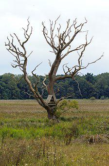 Dead Tree, Reed Beds, Overcast Sky, Landscape