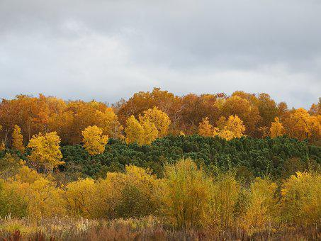 Autumn Forest, Mountains, Fall Colors, Golden Autumn