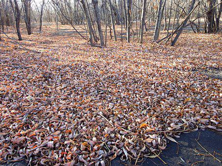 Late Autumn, Fallen Leaves, Autumn, The First Frost