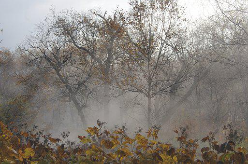 Late Autumn, Fallen Leaves, Bare Trees, Fog, Freezing