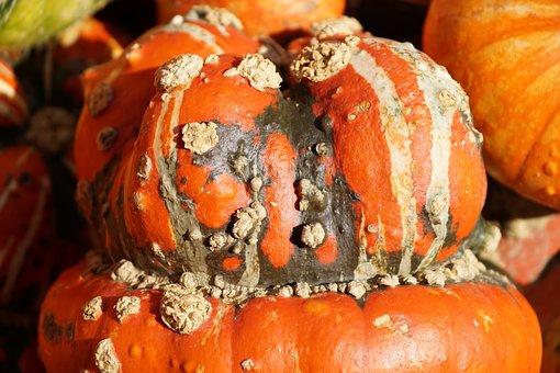 Gourd, Pumpkin, Autumn, Orange, Halloween