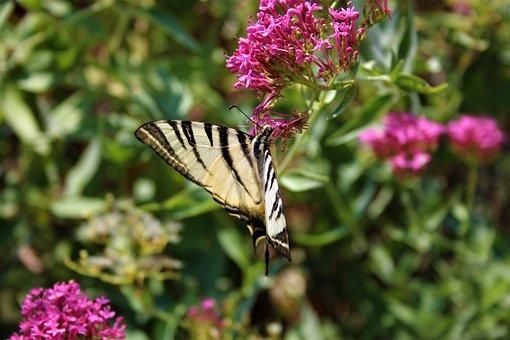 Butterfly, Nature, Summer, Plant, Flower, Green