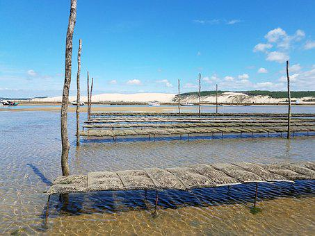Arcachon Basin, Oyster, Pila