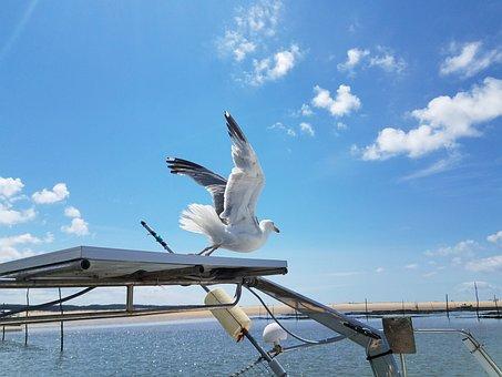 Seagull, Blue Sky, Sea