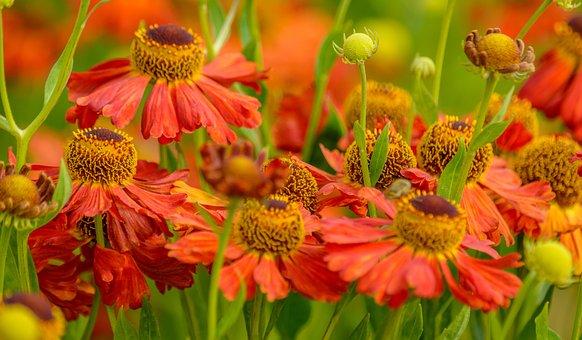 Summer, Fades, Flowers, Warm, England, Orange, Red