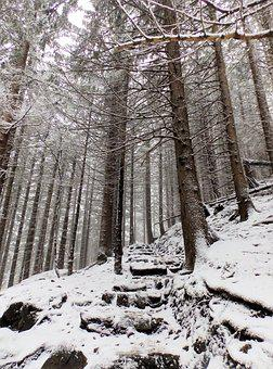 Forest, The Path, Stairs, Way, Tree, Winter, Snow