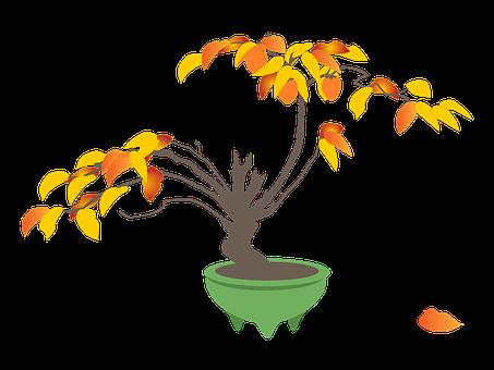 Persimmon, Persimmon Trees, Bonsai, Autumn
