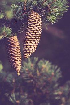 Autumn, Pinecones, Nature, Forest, Decoration