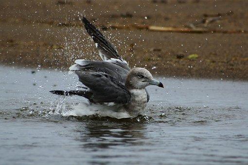 Animal, Sea, Beach, Seagull, Sea Gull, Wild Birds