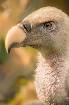 Bird, Vulture, Nature, Bird Of Prey, Animal, Beak, Zoo