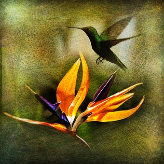 Birdie, Flower, Sheet, The Leaves Of The Branch, Greens