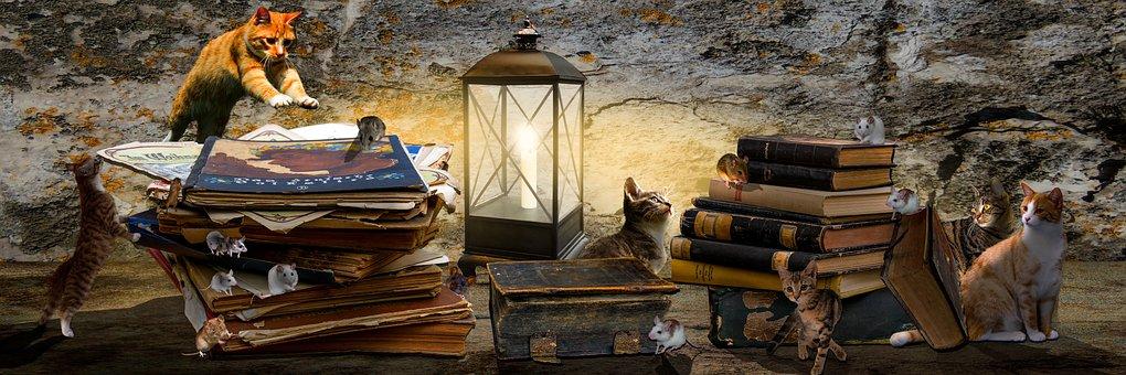 Animals, Fantasy, Composing, Books, Book Stack, Cat