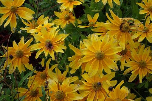 Buga, Brandenburg, Plant, Yellow