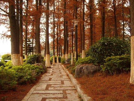 Guilin, Kwai Lake, Cedar Woods