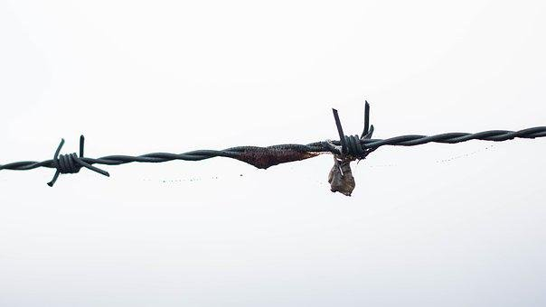 Barbed Wire, Dangerous, Scary, Sharp, Danger, Wire