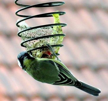 Bird, Tit, Songbird, Green Plumage, From The Rear