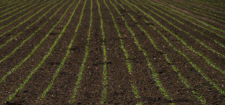 Seed, Harvest, Bed, Agriculture, Arable, Summer, Plant