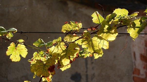 Hops Rotary, Hops, Leaf Hops