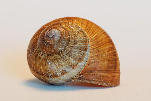 Shell, Snail, Animals, Housing, Empty
