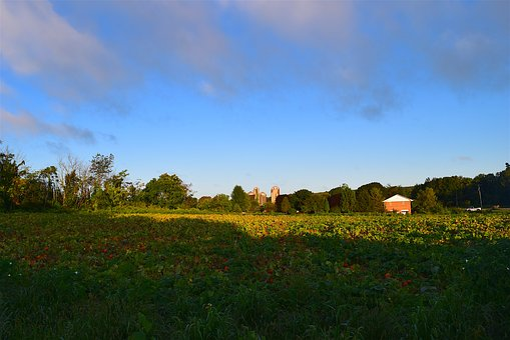 Field, Sunrise, Green, Clouds, Farm, Landscape, Sky