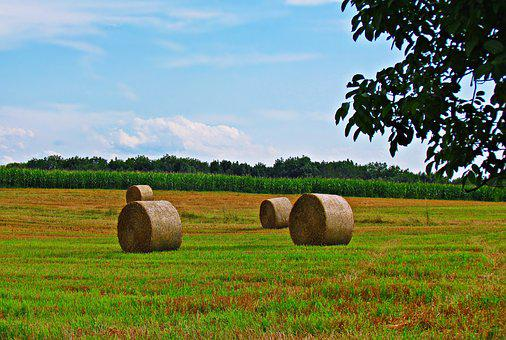 Meadow, Hay, Grass, Landscape, Summer, Nature