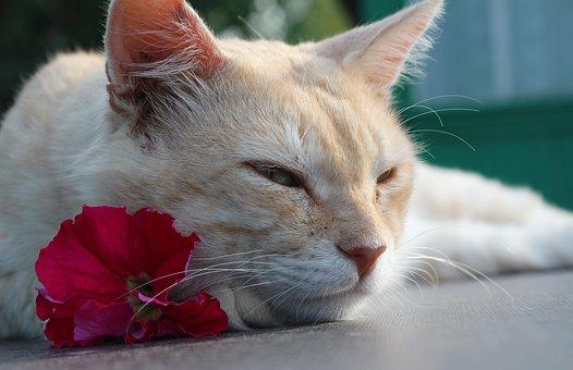 Cat, Mustache, Cream, Pet, Animal, Muzzle Cat