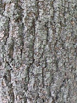Bark, Tree Bark, Tree, Wood, Nature, Plant, Log