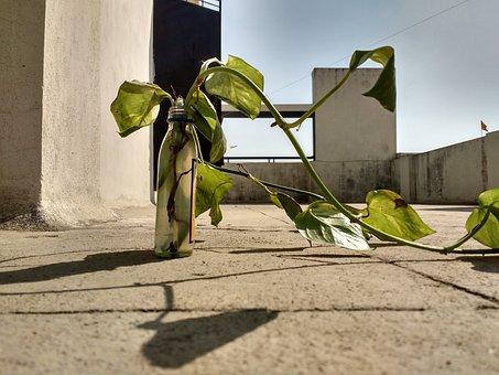 Money Plant, Portrait, Plant, Green, Water
