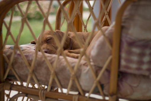 Dog, Sleep, Recreation, Armchair, Garden