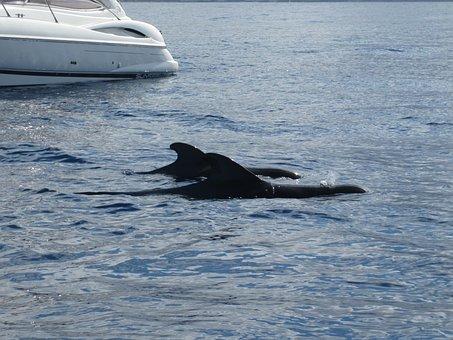 Boat, Whale, Sea