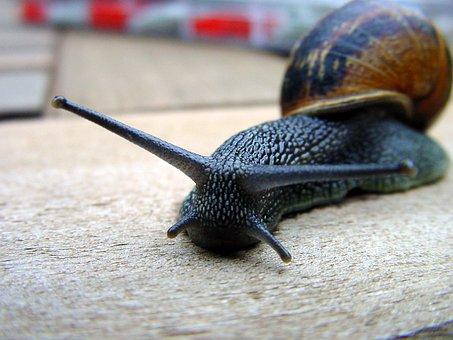 Snail, Cochlea, Lettuce, Mollusc, Cottage, Nature