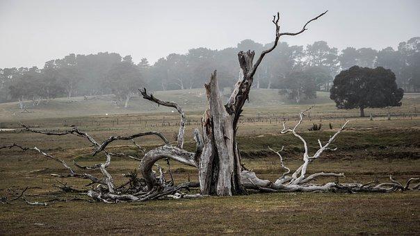 Tree, Australia, Outback, Natural, Landscape