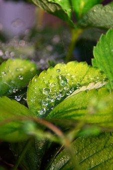 Just Add Water, Dawn, Water, Drop, Nature, Dew