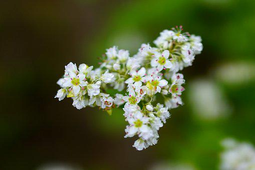 Flowers, Memilkkot, Bongpyeong, Autumn, Dew, Morning