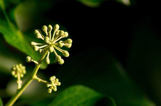 Climber Plant, Blossom, Bloom, Ranke, Small Flower
