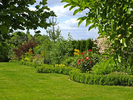 Garden, Hedge, Rush, Summer, Blossom, Bloom, Nature