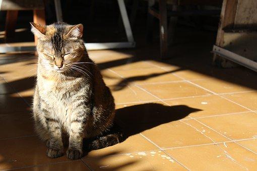 Gata, Cat, Kitten, Feline, Animal, Pet, Animals