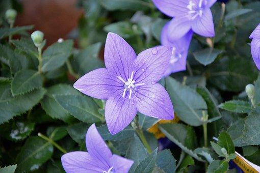 Flower, Purple Flowers, Plants Flowering, Green Foliage