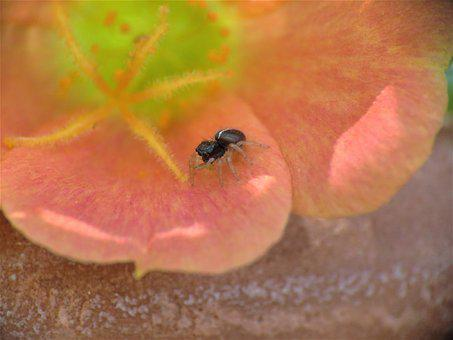 Insect, Spider, Tiny, Coral Color Flower, Green, Yellow