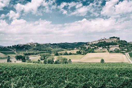 Wine, Vineyard, Grapes, Hills, Vintage, Autumn